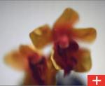 vidrio-impreso-newclarglass-p